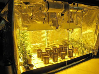 The air carbon filter is installed on the top of a hydroponic room with several flowerpot : carbon filter grow tent - memphite.com